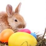 Spring Eggstravaganzas and More
