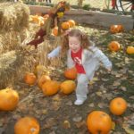 Pumpkin Patch Time in Sacramento