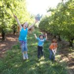 A Day Trip to Apple Hill