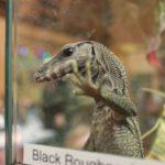 Reptile Love at The Serpentarium