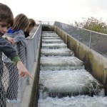 Nimbus Fish Hatchery Salmon Ladder
