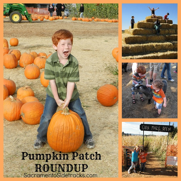 Top Right - Dave's Pumpkin Patch, Middle Right - Fog Willow Farms, Bottom Right - Kids Inc. at Apple Hill, Large Photo - Pumpkin Farm