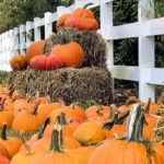 Pumpkin Patch Roundup 2015
