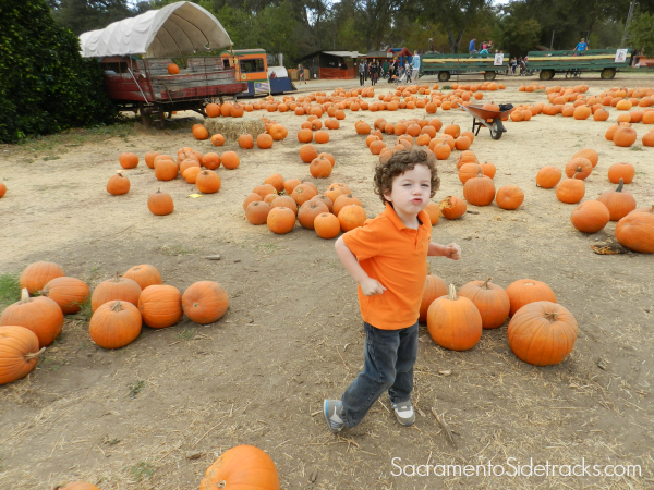 Photo location: The Pumpkin Farm in Citrus Heights