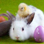 Easter Egg Hunts & Eggstravaganzas in Sacramento