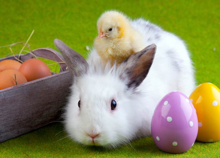 easter egg hunts eggstravaganzas in sacramento sacramento